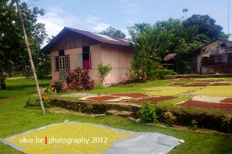 Pemandangan yang umum dijumpai kala berjalan-jalan di Maluku adalah tikar-tikar yang digelar di pekarangan atau di jalan untuk menjemur cengkeh.