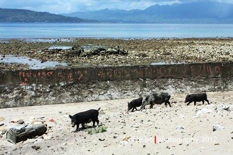 Benteng Nieuw Selandia, haruku, destinasi wisata maluku, pulau haruku