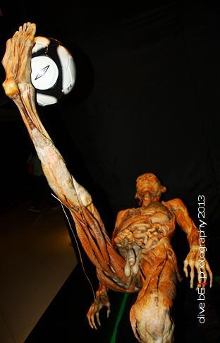 The Anatomy Show