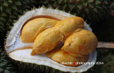Durian Terengganu