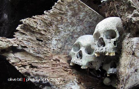 tengkorak toraja, destinasi wisata sejarah toraja, tongkonan buntu pune