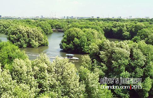 wisata hutan mangrove, taman wisata alam angke, taman wisata mangrove