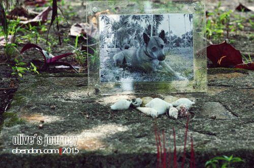 kuburan anjing, kuburan di bintan, wisata bintan