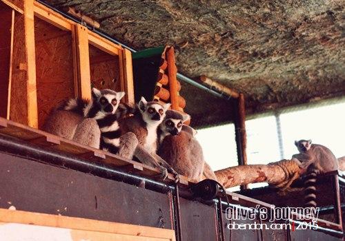 secret zoo, museum di malang, wisata malang