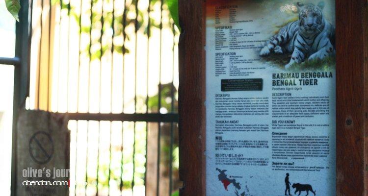 bali zoo, paket bali zoo, kebun binatang bali, the sanctoo villa, naik gajah di bali zoo
