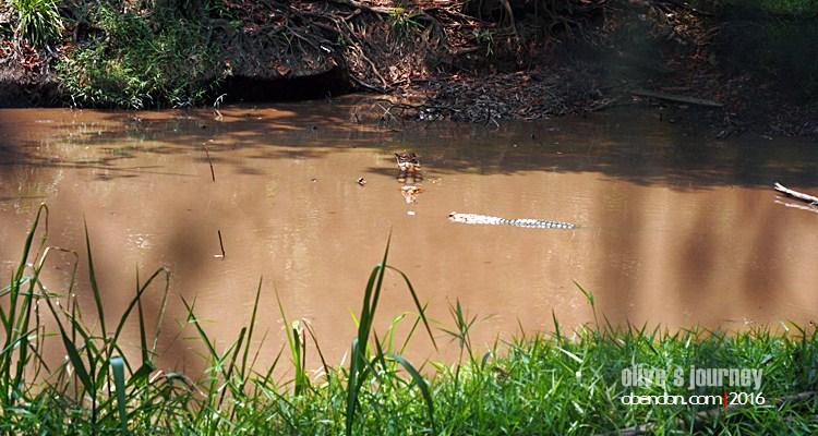 Tapirus indicus, tapir asia, penangkaran tapir, Sungai Dusun Wildlife River, eat travel write, visit hulu selangor 2017