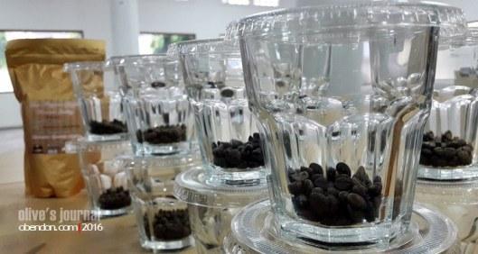 cupping coffee, coffee cupping, cupping, uji kualitas kopi, tester kopi