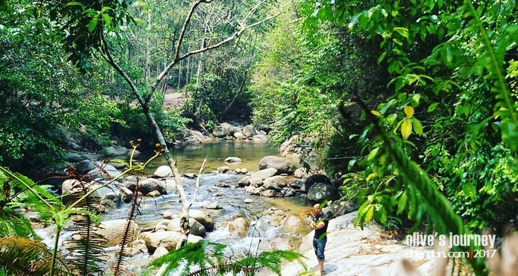 chilin sanctuary, forest, rainforest, hutanhujantropis, hari hutan sedunia 2017, international day of forest
