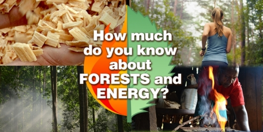 forests and energy, international day of forests 2017, hari hutan sedunia