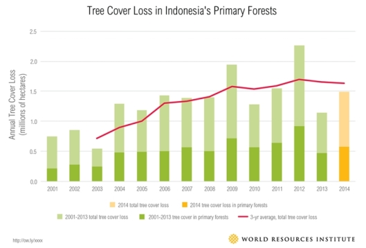 Indonesian forest, international day of forests 2017, forest and energy, hari hutan sedunia, wajah hutan indonesia