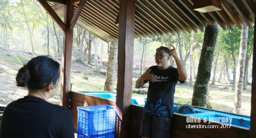 the pade dive resort, resort di sabang, diving di sabang