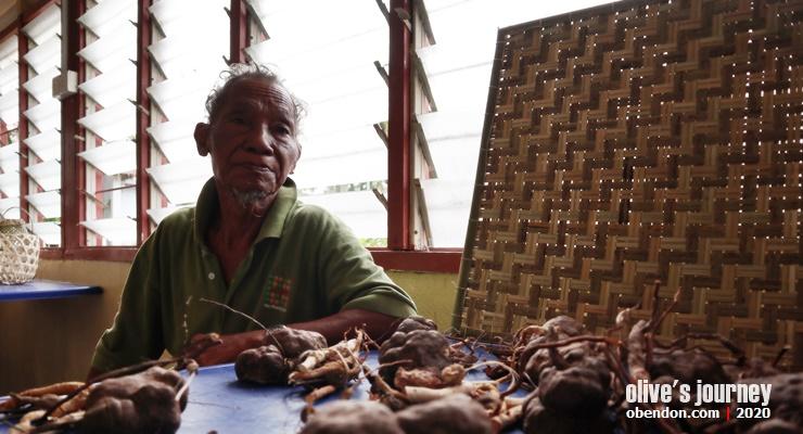 khasiat tongkat ali, obat kuat dari malaysia, orang asli temuan, indigenous people malaysia